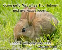 View the image: Bunny in field, Matthew 11:28