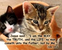 View the image: Kittens in pot, John 14:6