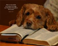View the image: Psalm 27:14, Dog & Bible