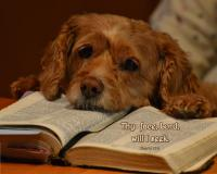 View the image: Psalm 27:8, Dog & Bible